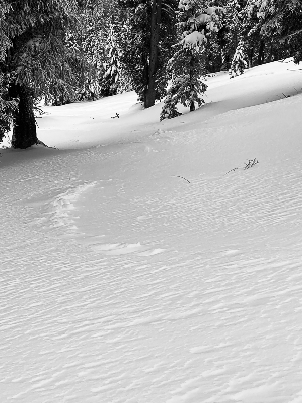 Yesterday's tracks were filled in overnight in exposed areas.