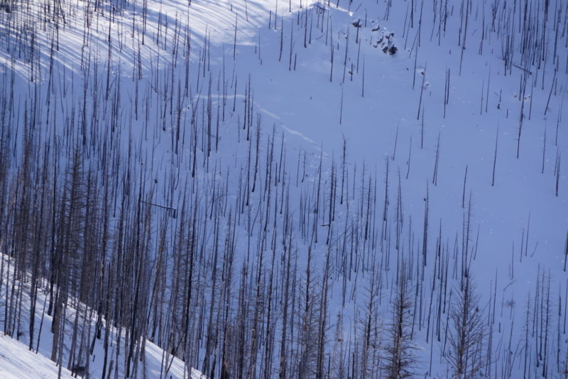 Another look at a persistent weal layer avalanche on a north aspect.